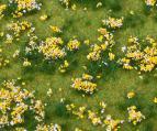 180467 PREMIUM Landskapssegment blomsteräng färgglad