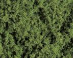 171403 PREMIUM terräng gräs grön 290 ml