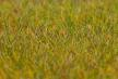 180484 PREMIUM markfiber äng lång ljusgrön 30 g