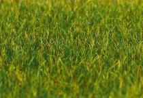 180484 PREMIUM markfiber äng lång m.grön 30 g